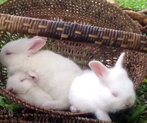 bunny, rabbit, and soft image