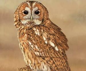birds, owls, and birds of prey image
