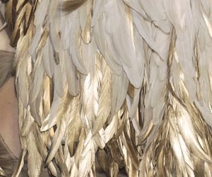 gold, wings, and feather image