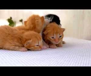 animal, baby cat, and dog image