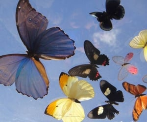 archive, butterflies, and butterfly image