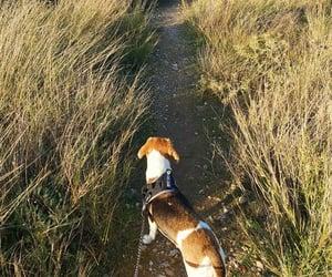 beagle, love, and dog image