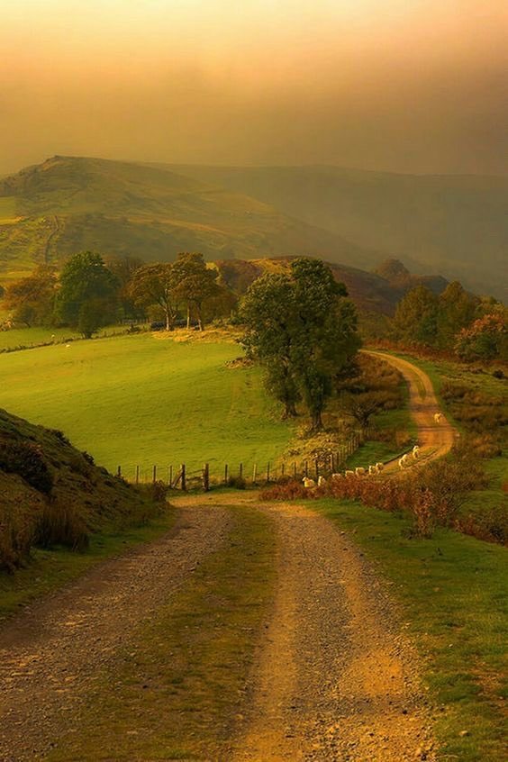 nature, green, and landscape image