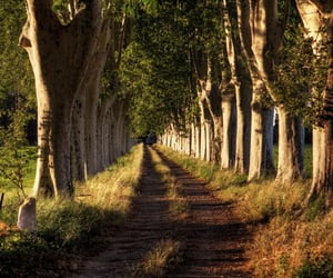 country road, dirt road, and road image