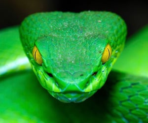green, toxic, and snake image