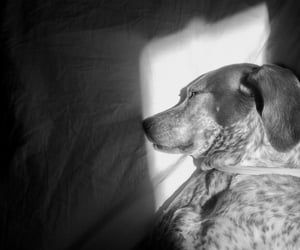 adopt, blackandwhite, and luz image