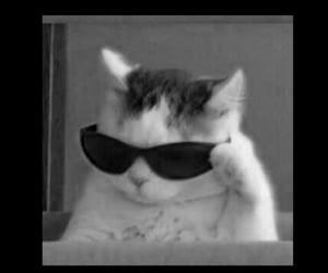 cat and meme image