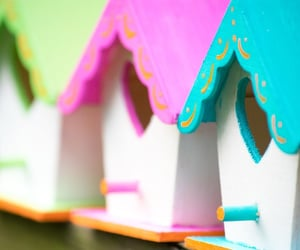 bird, birdhouse, and colorful image