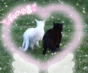 archive, cat, and love image