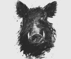 animal, charcoal, and wild boar image