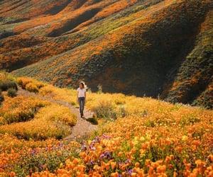summer, nature, and orange image