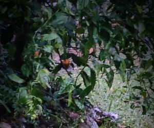 backyard, green, and citrus image