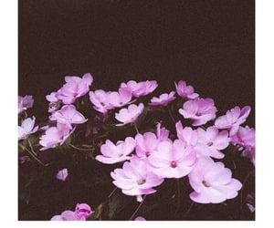 camp, flower, and flor image