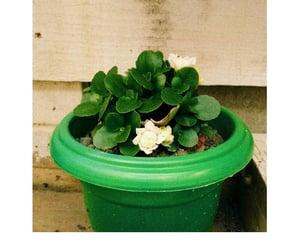 flor, natureza, and photographic image