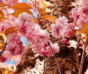 background, spring, and blossom image