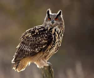 birds, owl, and owls image