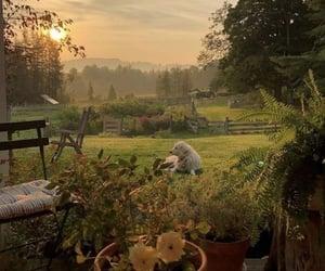 dog, nature, and sunset image