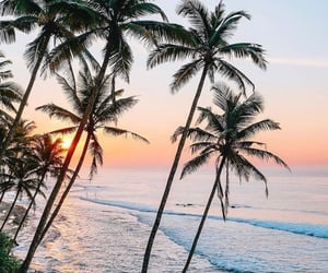 ocean, palm trees, and tropical image