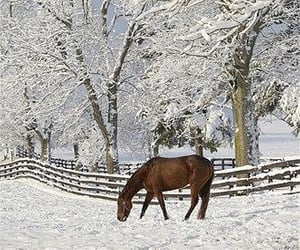 barn, pasture, and snow image