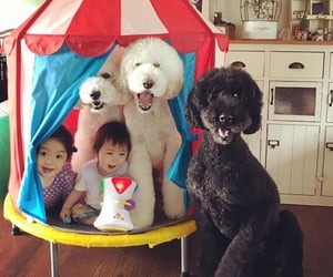 funny, funny kids, and funny dog image