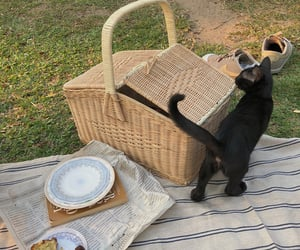 cat, picnic, and aesthetic image
