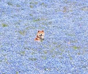 flowers, dog, and animal image
