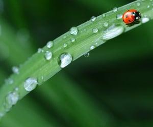 ladybug, leaf, and plants image