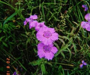 botanical, flower, and bestoftheday image