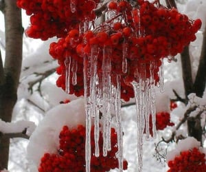 snow, red, and white image