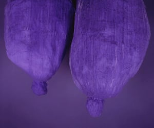 purple and photography image