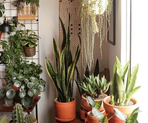 aesthetic, green, and house plant image