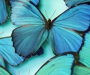 animals, blue, and minimalist image