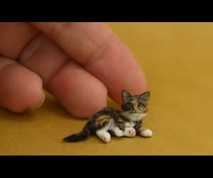6, baby cat, and cat image