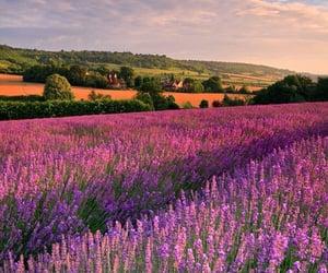 beautiful, field, and landscape image