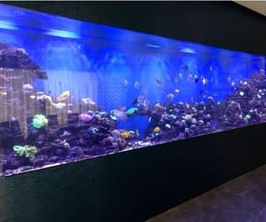 珊瑚, 魚缸保養, and 水族工程 image