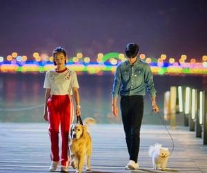 china, dog, and Relationship image