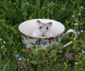 hamster, nature, and animal image