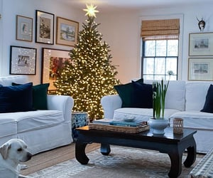 christmas, winter, and winter wonderland image