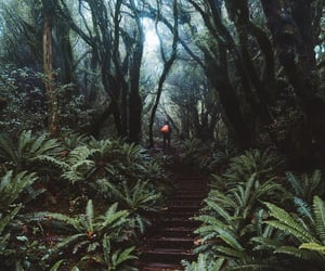 forest, Hot, and nature image