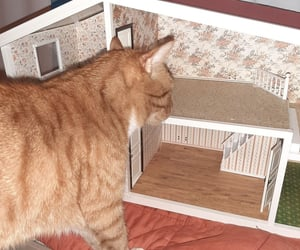 cat, dollhouse, and newpost image