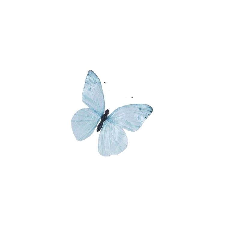 butterfly, icon, and blue image