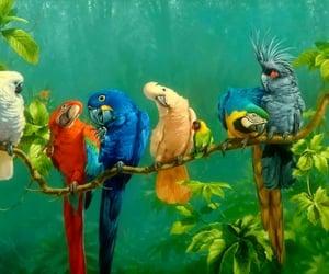 limb, parrots, and variety image