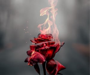 flowers, fire, and background image