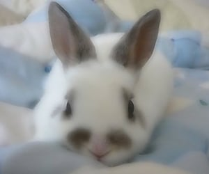 archive, soft, and bunny image