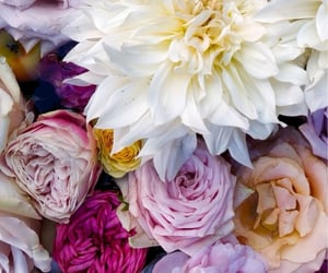 background, colorful, and flowers image