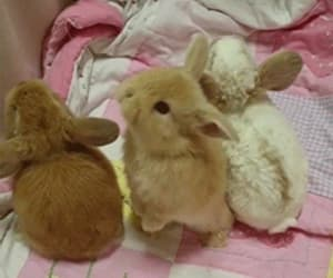 animals, gif, and girl image
