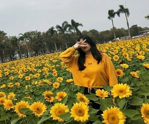 country side, girl, and sunflower image