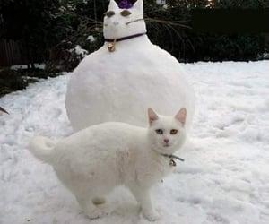 animals, kitty, and nature image