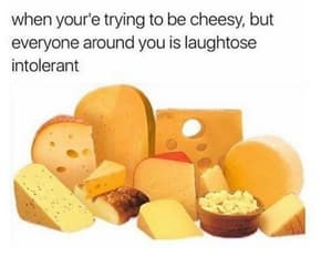 funny, cheese, and lactose image