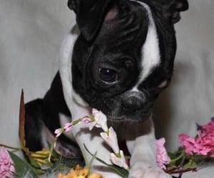 dog, inspiration, and lovely image
